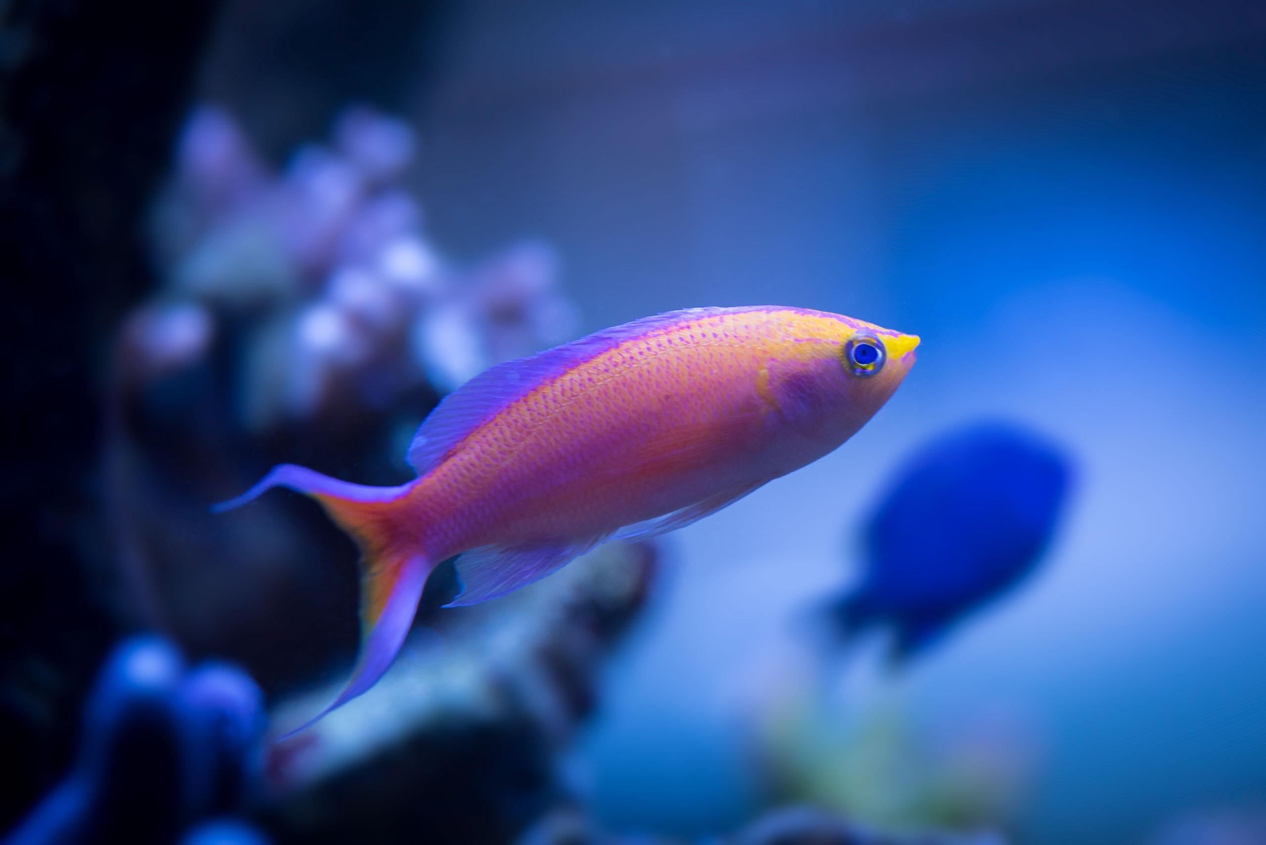 Oceanlife-Aquariums